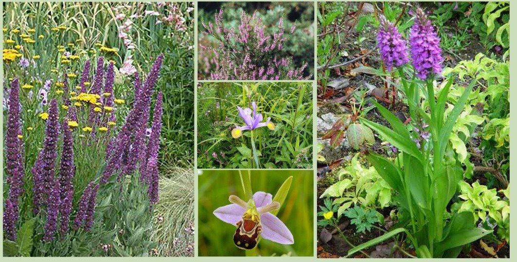 Test sobre plantas ornamentales noguera de albarrac n for Matas ornamentales